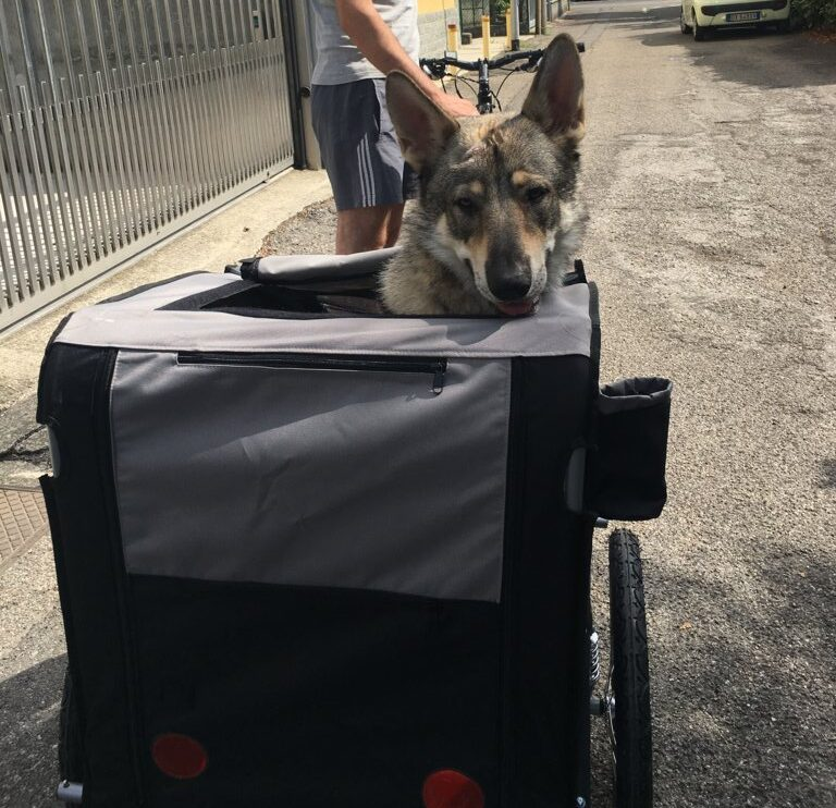 Come prepararsi a un viaggio in bicicletta con il proprio cane