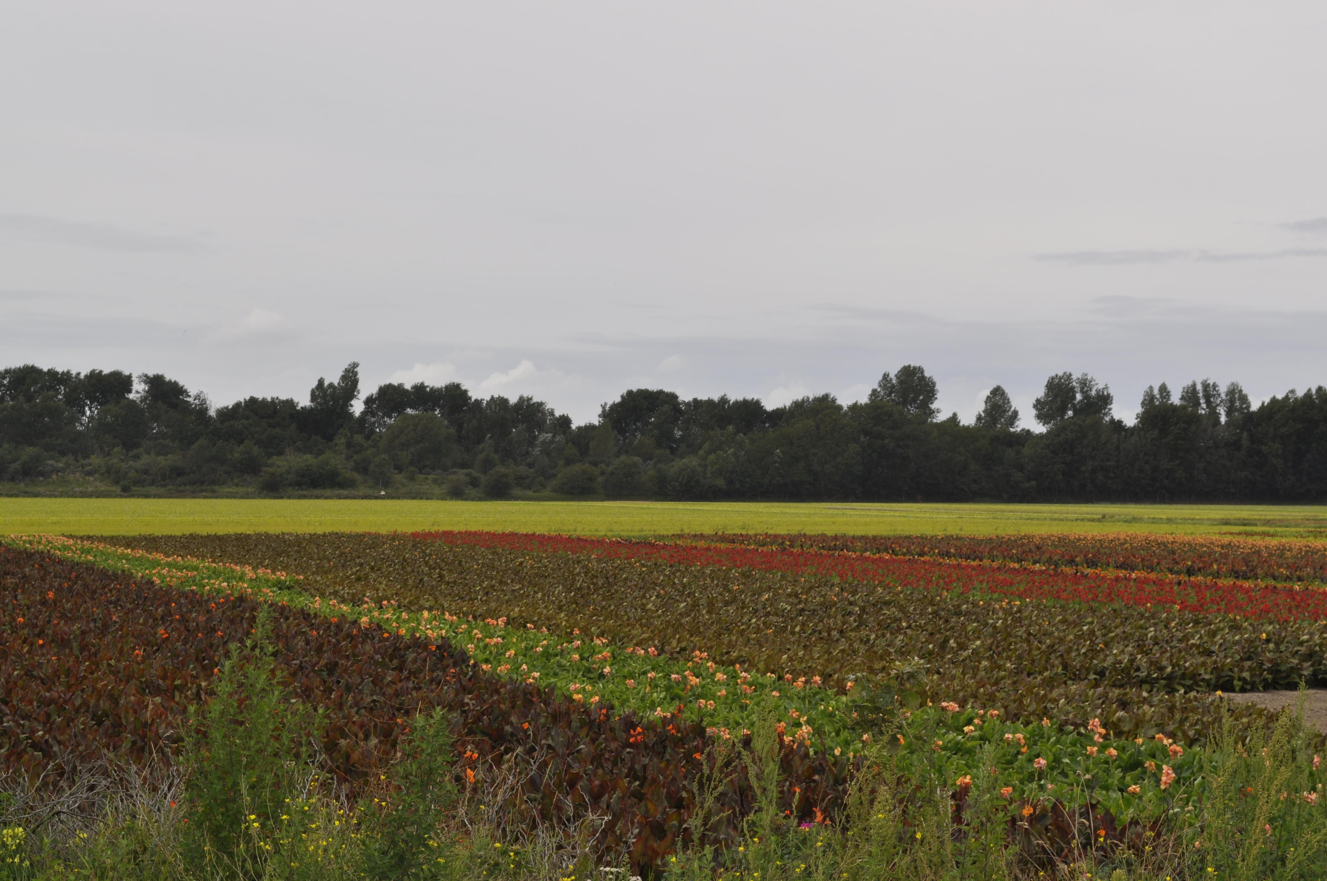 Il branco in trasferta nei Paesi Bassi – Giorno 7