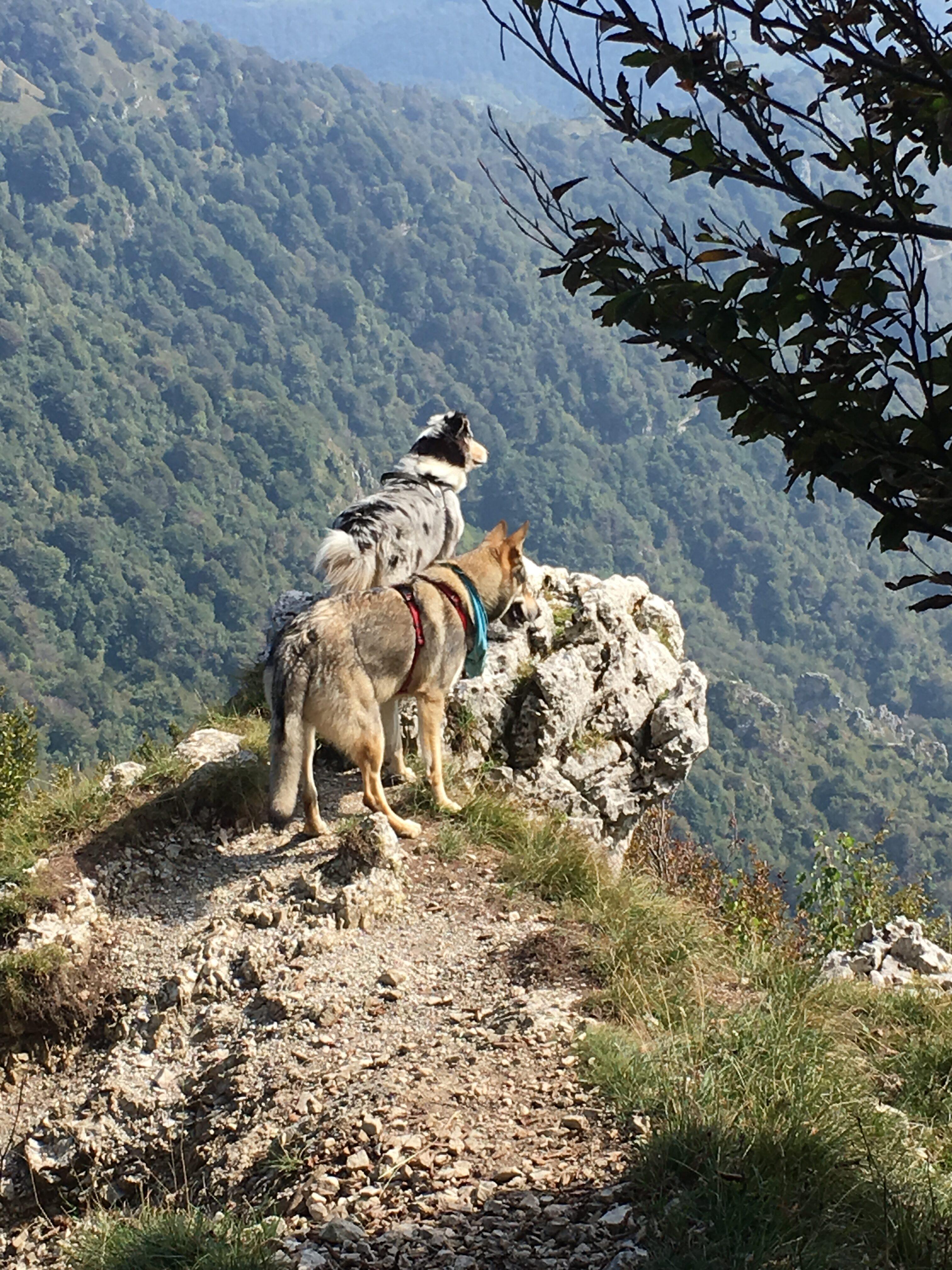 Passeggiata a 6 zampe (o più) sul Monte Due Mani