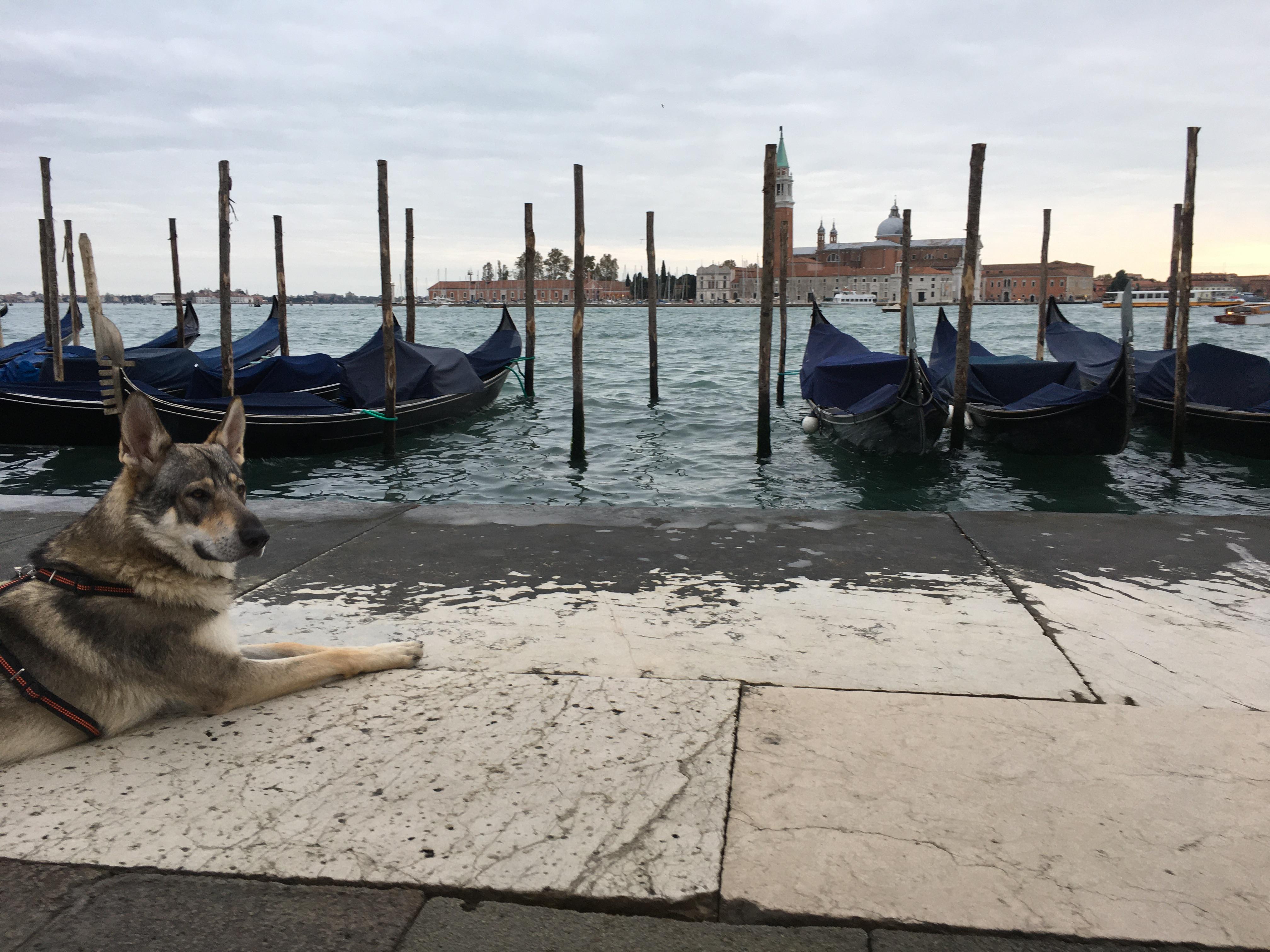 Venezia e i suoi segreti a portata di zampa