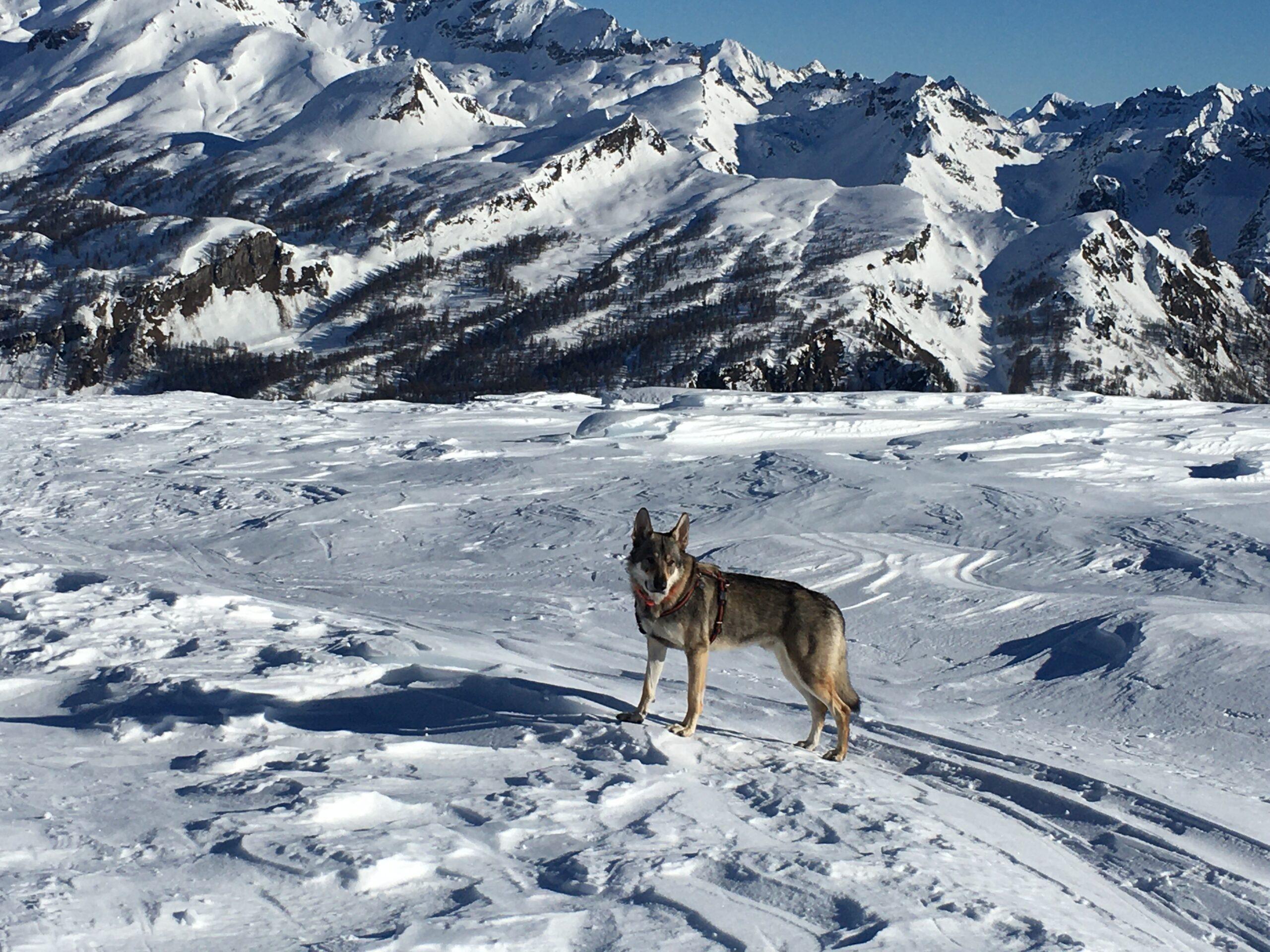 Ciaspole sull'Alpe Devero