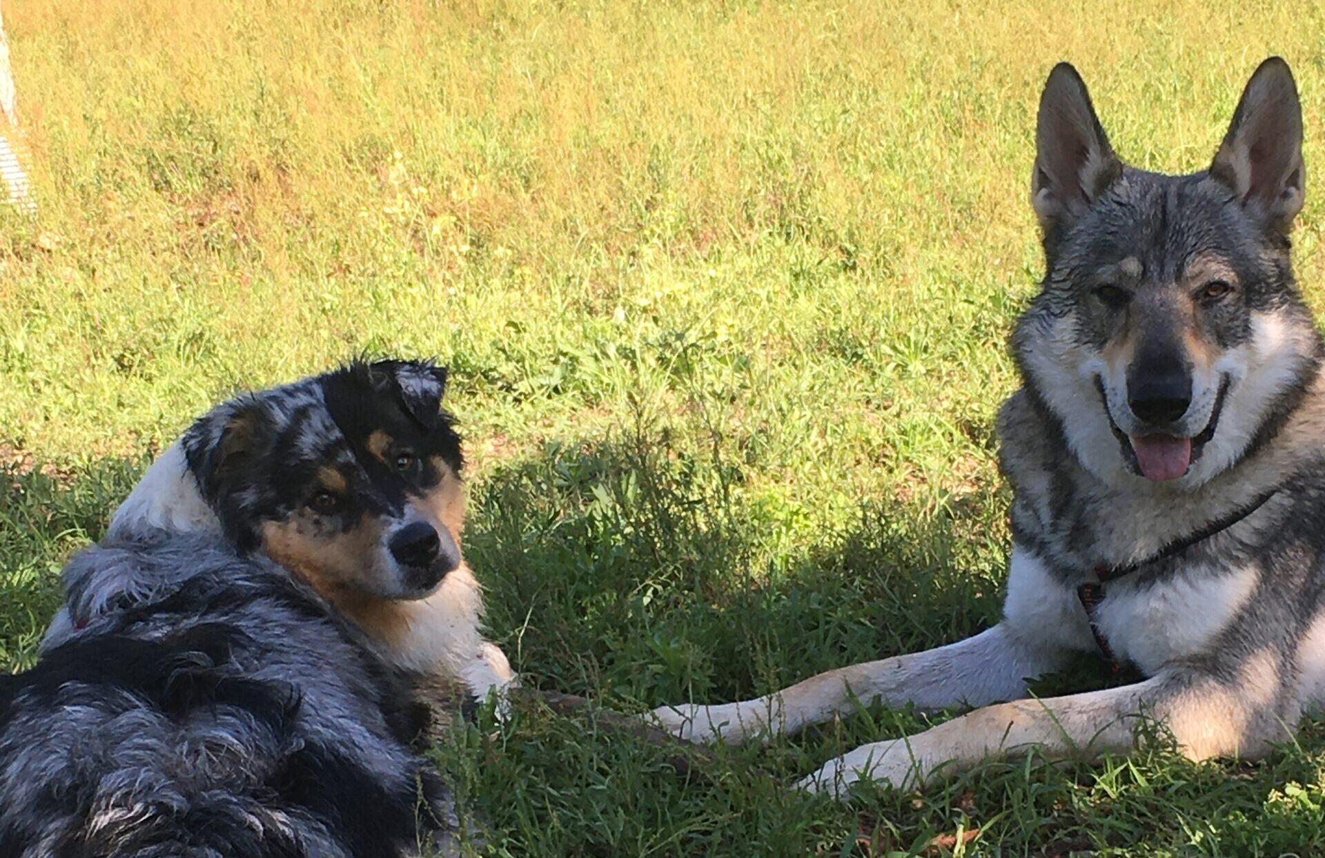 Vademecum per le aree cani